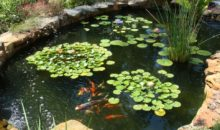 Искусственный водоем на дачном участке: виды и особенности